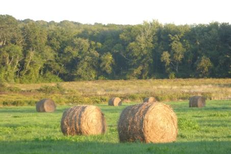 Pastoral Tiverton, RI