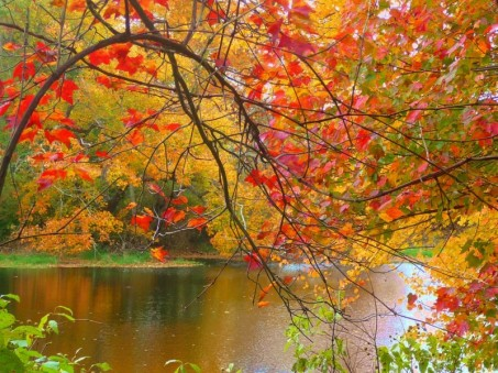 Peak foliage in Massachusetts