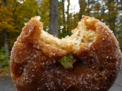 Cider Donuts at Cider Bellies, Moultonborough Farm, HN