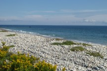 Horseneck Beach, Massachusetts