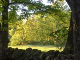 Still green in northern Massachusetts