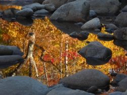 Fall captured in a reflection in NH's Swift River