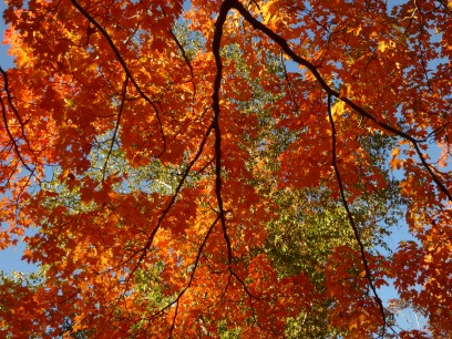 Always look up in autumn