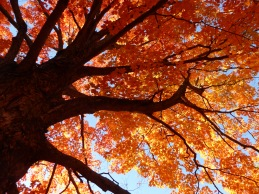 An Orange Canopy