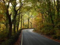 What a beautiful canopy over this road...