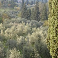 The beautiful grounds... surrounded by olive groves