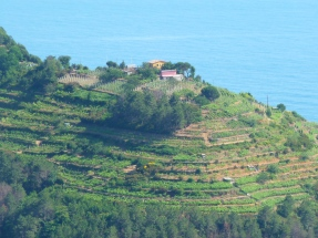 Along the trail from Vernazza to Monterosso