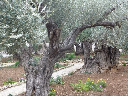 The Gardeb of Gethsemane