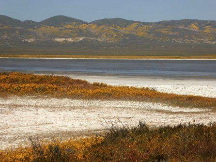 Salt encrusted Soda Lake