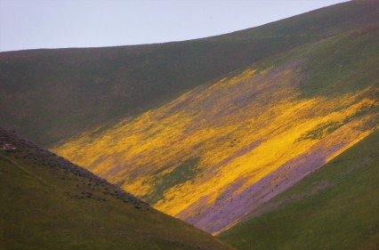 Easter Colors in the Temblor Range, California