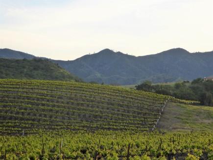 Tuscany? No, Hollister, California