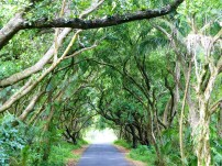 A tunnel of greenery, Puna
