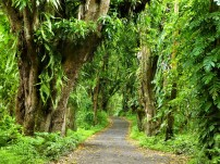 The impossible greens of the coastal road in the Puna District