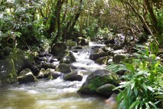 A mountain stream on Kaua'i's north shore