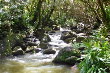 A mountain stream on Kaua'i's north shore