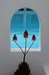 Pool-side plants... Mykonos, Greece