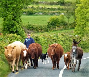Rush hour in Northern Ireland
