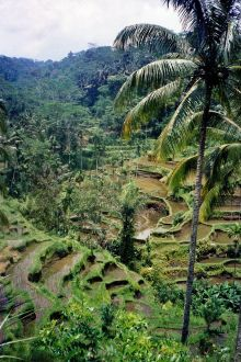 The terraced rice paddies