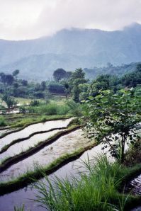 The fields of Bali