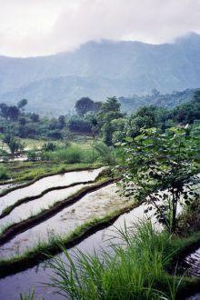 The fields of Bali