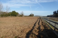 Marsha's pasture