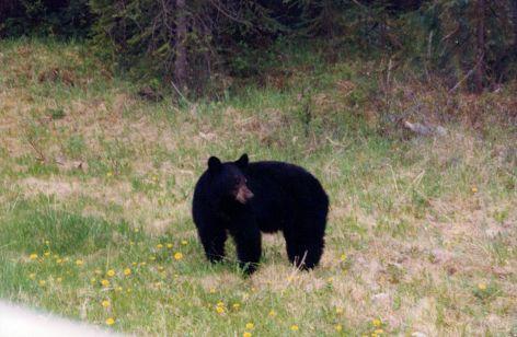 Mamma Bear...