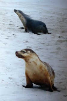 The residents of Seal Bay