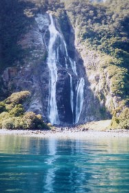 The shoreline of Milford Sound