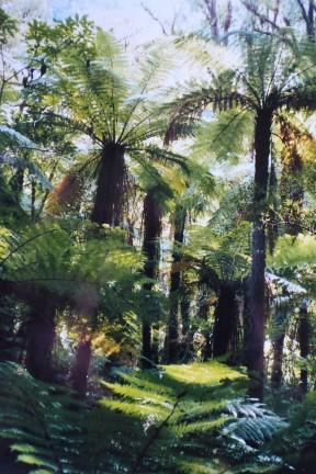Tropical Queensland