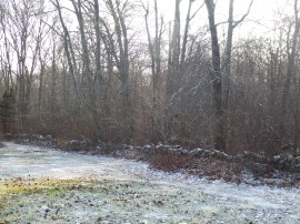 A light dusting of Christmas snow...