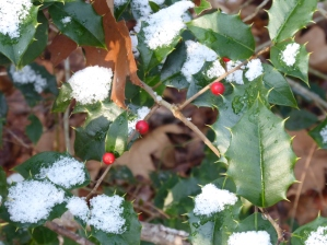 Snow on the holly for Christmas