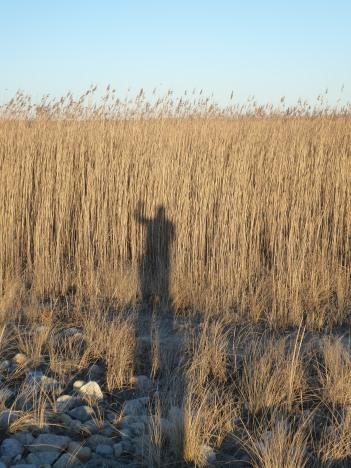 My long shadow...