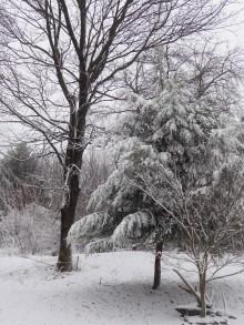 Snow in the Alleghenies