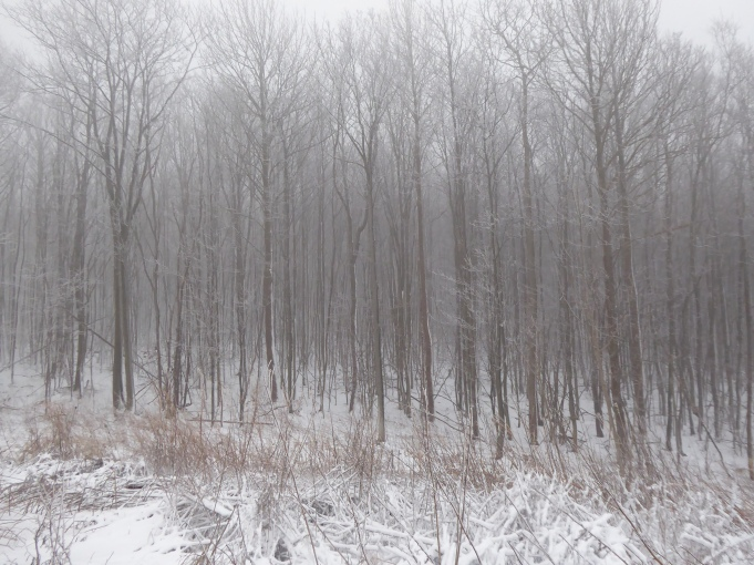 Snowy Pennsylvania