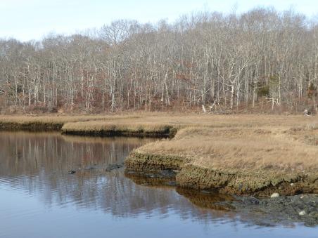 Salt marshes at Lloyd Center
