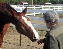 Marsha gets a greeting from jack, who used to board at her barn