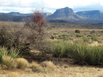 Arizona desert near Bullhead City