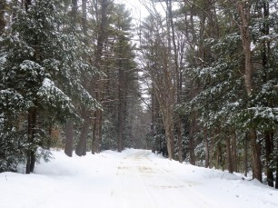 exploring a snowy side road...