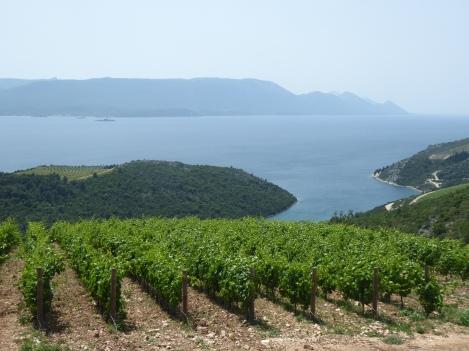 Vineyards along the coast
