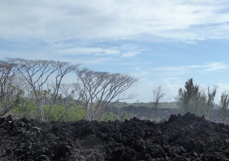 Lava flows leave narrow pockets of vegetation