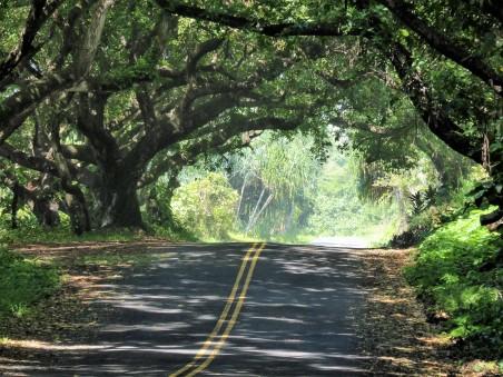 The Kalapana - Kapoho Road