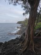 The Puna Coastline