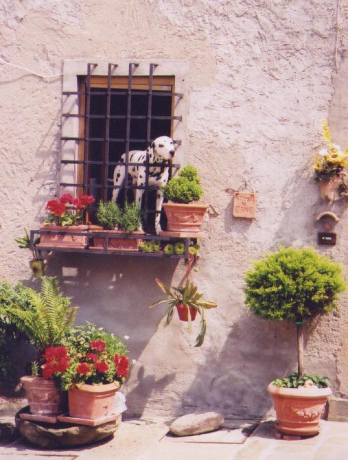 Tuscany Anghiari Cane
