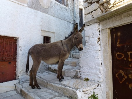 An unexpected resident of Naxos town