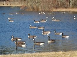 Peaceful scene, Rochester, Massachusetts