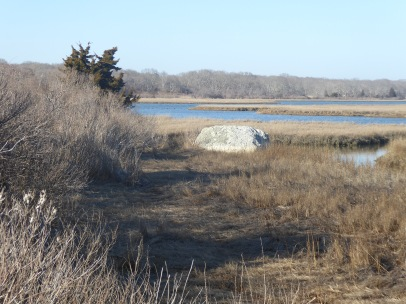 Hiking through the salt marshes at Horseneck